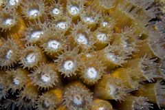 Coral Polpys Royalty Free Stock Images