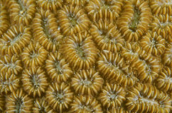 Coral Polyps Stock Photography
