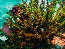 Coral polyps on the reef off the coast of Maldives Royalty Free Stock Photos