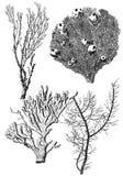 Coral polyps Stock Photo