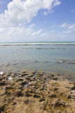 Coral at Porto de Galinhas beach Stock Photos