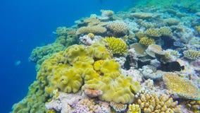 coral próximo acima em recifes Austrália do agincourt Foto de Stock