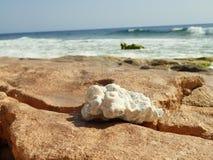 Coral que encontra-se em uma praia selvagem Imagens de Stock