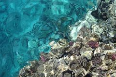 Coral in the red sea. Stock Images