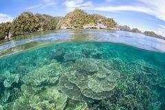 Coral Reef à distance et en bonne santé en Raja Ampat Photographie stock