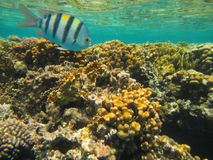 Coral Reef Royalty-vrije Stock Afbeeldingen