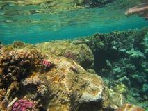 Coral Reef Fotografering för Bildbyråer
