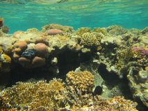 Coral Reef Royalty-vrije Stock Afbeelding