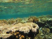Coral Reef Lizenzfreies Stockfoto