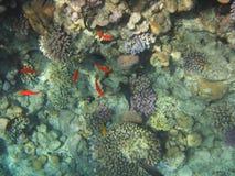 Coral Reef Royalty-vrije Stock Fotografie