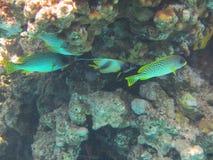 Coral Reef Stockfotografie