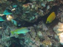 Coral Reef Stockbilder