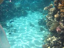 Coral Reef Lizenzfreie Stockfotografie