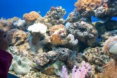 Coral Reef Fotos de Stock Royalty Free