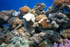 Coral Reef Foto de Stock