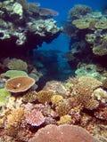 Coral Reef. Hard Coral Reef off the waters of Matamanoa Island, Fiji royalty free stock image