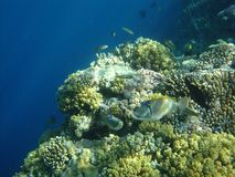 Coral Reef Imagens de Stock