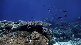 Coral Reef imagen de archivo