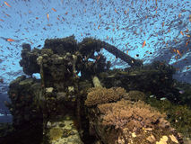 Coral reef. In Brother islands in the red sea Stock Image