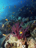 Coral reef. In brother islands in egypt Stock Images