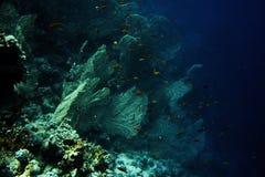 Coral reef1 fotografía de archivo