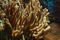 Coral reef. Image of an aquarium in the zoo Stock Image