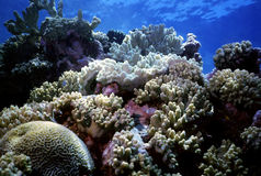 Free Coral Reef Stock Images - 148534