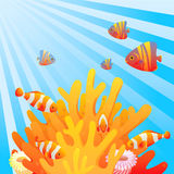 Coral reef. Royalty Free Stock Images