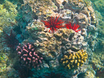 Free Coral Reef Royalty Free Stock Photos - 16098588