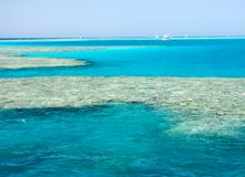 Coral reef. In the red sea Royalty Free Stock Image
