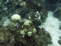 Coral Reef. Underwater shot of a coral reef with fishes Stock Image
