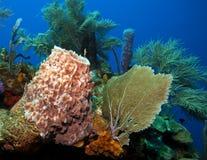Coral reef. Underwater coral reef off the coast of Roatan Honduras Royalty Free Stock Images