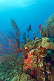 Coral reef. Underwater coral reef off the coast of Roatan Honduras Royalty Free Stock Photography