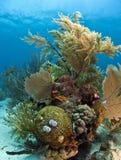 Coral reef. Off the coast of Roatan Honduras Stock Photos