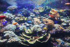 Free Coral Reef Royalty Free Stock Images - 18130379