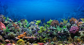 Coral Reef. Underwater life. Coral reef, colorful plants in ocean