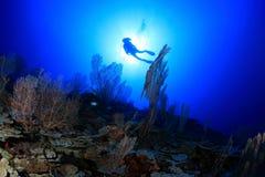 Coral reef Stock Photos