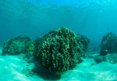 Coral reef. Sunlight shining on a colorful coral reef Royalty Free Stock Photography