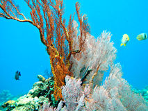 Coral reef. Stock Photos