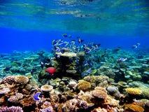 Coral Reef Immagini Stock Libere da Diritti