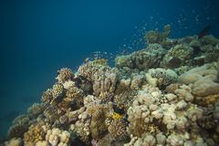 Coral reef. Underwater view of coral reef Stock Photo