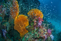 Coral Reef Images stock