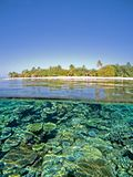 Coral reef. Infront of a Maldive island Stock Images