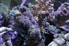 Coral reef. A colorful coral reef with many different types of corals and fishes Royalty Free Stock Images