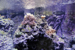 Coral reef. A colorful coral reef with many different types of corals and fishes Stock Images