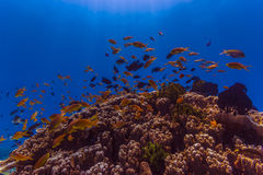 Coral Reef Foto de Stock Royalty Free