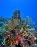 Coral reef. Underwater Coral reef scene on the island of Dominica in the Caribbean Stock Photos