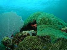 Coral Reef Royaltyfri Bild