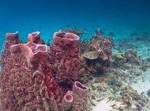Coral Reef Fotografie Stock