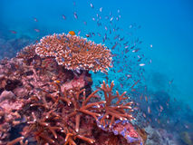 Coral Reef royaltyfria bilder